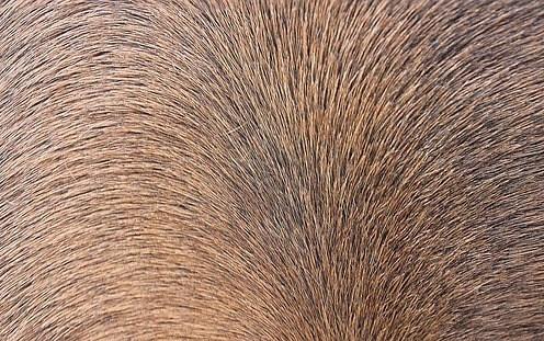 Horse Hair